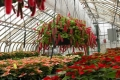 groden-greenhouse-gallery-1