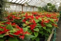groden-greenhouse-gallery-2